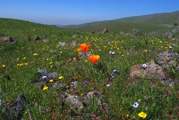 Celebrating Wildflowers This is an excellent effort. Use and